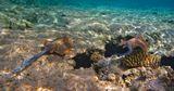 Хвостоколовые (лат. Dasyatididae) или жалящие скаты — одно из семейств отряда хвостоколообразных надотряда скатов.Могут быть опасны для человека благодаря своему ядовитому хвосту, которым пользуются не для нападения, а в целях защиты.Красное море
