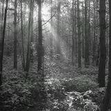 Киев-88, лес, Солнце, лучи, утро, июль