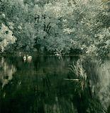 Классический инфраред, белые листья. (хотя в реале листья не выходят белые. Если, конечно, не пересветить фото) Статья про ИК, пока на моем сайте только http://koutan.narod.ru/IR_color.htm