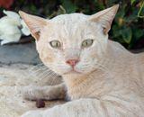 Большое впечатления произвели египетские кошки-осторожные, голодные,с особым взглядом........