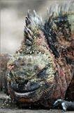"""Еще раз спасибо всем, кто принял участие в выборе темы!)В серию """"ГЛАЗА В ГЛАЗА"""" вошли фотографии диких животных в естественной среде обитания."""