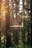 Паутинка на закате. Каждая ее струна играет в лучах солнца. Свердловская область. Июль 2011.