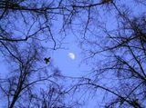 Сумерки, бульвар, луна, деревья, птица.