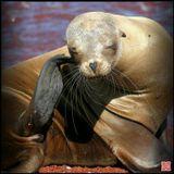 Всё те же Галапагосы... Кстати, обратите внимание на маникюр, совершенно не ожидал увидеть у морских львов - ногти... :))