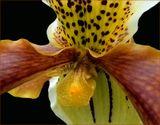 Орхидея крупным планом.