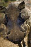 """В серию """"ГЛАЗА В ГЛАЗА"""" вошли фотографии диких животных в естественной среде обитания."""