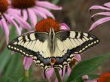 бабочка, природа, макро