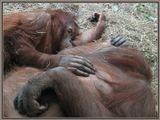 зоопарк, обезьяны