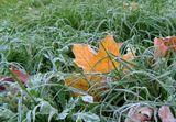 поздняя осень, иней