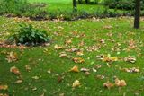 В Питер тоже стучится осень. Дубы сбрасывают желтеющую листву и атакуют прохожих градом из желудей.  Путешествия в фотографиях|Дубовая осень! http://www.marshavin.com/?p=2049