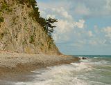 Сосна на скалистом берегу черного моря