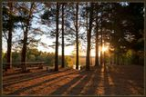 Окунево, лес, лучи, солнце, свет, восход, утро