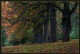 Чехия осень лес