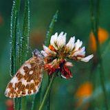 бабочка, роса, еще не проснулась