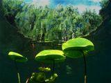 Так видит поверхность воды ныряльщик (дайвер), погружаясь в озеро.