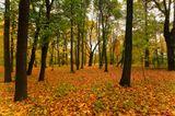 Пейзаж, осень, парк, дерево, листья