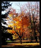 autumn, park.colors