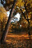 осень,парк,пейзаж,деревья,киев,желтый,осенний
