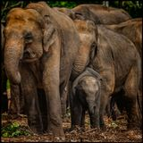 Заповедник слонов. Шри Ланка