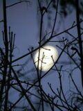 луна, утро