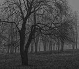 Туманное и мокрое утро