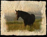Дорога на плато Лагонаки. Внизу долина реки Дах и станица Даховская. Адыгея. На краю обрыва паслось несколько лошадей с жеребятами, а этот, по-моему вожак.  Он определил какую-то границу доступа, и когда я делала шаг за неё, прижимал уши, скалил зубы, фыркал, всячески запрещая подходить ближе.