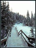 Это Ханты-Мансийск.Спуск в парк Самаровский Чугас,тянется на несколько километров по тайге.Canon EOS 300+Flektogon 4/20.Kodak Profoto 100