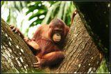Сингапурский Зоопарк.