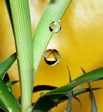 Растение и капли воды