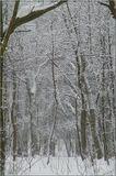 Голосеевский лес в феврале 2011. А в этом году снега мы и не видели...