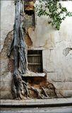 я не знаю, что тут первично...Если дерево, то это оччень романтично, и говорит о народе...если стена, - то это удивительно...