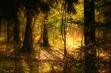 волшебство красота лес природа