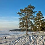 Несколько лет подряд выхожу на съемки 7 января - в Рождественский день - и всегда этот день был светлым и солнечным, даже если накануне, как нынче, стояла сплошная хмарь непроходимая.Со светлым вас днём Рождества Христова, господа!