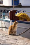 Кот сидел на пирсе очень долго. Он не издавал ни звука, а просто преданно заглядывал рыбакам а глаза прося рыбку.