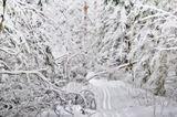природа рисунок зима снег