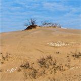 - дюны верхушка.Фрагмент Дюны Планеристов, что на литовской части Куршской косы.Когда-то ее высота достигала 70 метров, на сегодняшний день- около 50.