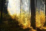 Все в тумане предрассветном-- Мрак его сошел с небес,Но редеет он заметно,Вышло солнце- он исчез.