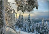 """Национальный парк """"Коли"""" в северной части Карелии (Финляндия)."""