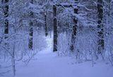 21 января 2012 года. Ранний вечер, легкий снег в лесу. Зимняя сказка в голубых тонах. Наконец-то в Беларусь пришла настоящая снежная зима! Дождались! Ура!!!