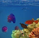 Сверху по часовой стрелке: Пятнистый Полурыл, Рыба- Кузовок, Зебросома- Парусник,Масковая Рыба- Бабочка, Медуза Цефея Красное море