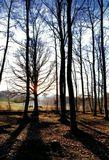 В Арденах, Бельгия. Зимний пейзаж.