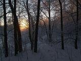 Зима. Лес. Рассвет.
