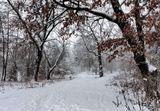 Снимок сделан 22.01 2012 г. в окрестностях Киева. Первый снегопад за эту зиму.