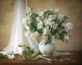 Жасмин , роняя лепестки… И сладкий снег осыпанных цветов Вновь возвращает счастье и мечты, И образы моих забытых снов…