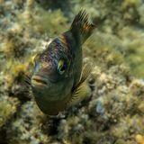 Эти небольшие рыбки нападали, разворачиваясь на большой скорости у самого объектива