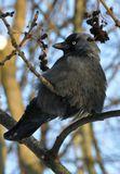 у этой птицы определенно есть что-то от высокой моды:)))