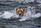 Хорошо плывёт вон тот в медвежьей шубе :)