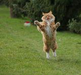 """Прозевал """"всемирный день кошек"""" - 1 мартаВсех с ПРАЗДНИКОМ!И пусть у них всё будет в сметане:)"""