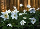 Милые,нежные,трепетные Барышни!:))...Оставайтесь всегда такими же яркими и неповторимыми!...Пусть ваши глаза лучатся радостным светом и сбываются все ваши мечты!...С Днём Весны!!:))