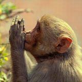 Намасте (санскр.) — индийское и непальское приветствие. Намасте, как жест представляет собой соединение двух ладоней перед собой. Чем больше уважения к собеседнику, тем выше ладони.